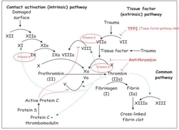 Anticoagulant drugs